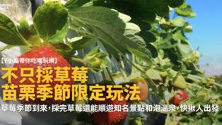 【Y小編帶你吃喝玩樂】苗栗不只採草莓~季節限定玩法