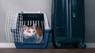 【移民英國】幫寵物移居英國 唔一定要搵公司幫手
