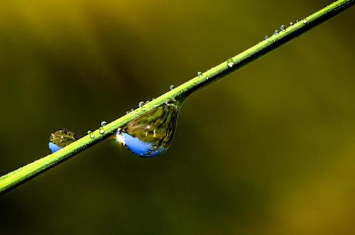 Flickr photo of the day: a drop of poetry