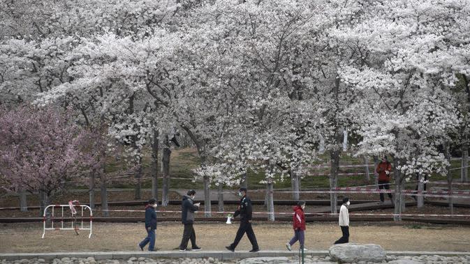 Petugas kemanan berpatroli saat banyak pengunjung menikmati bunga sakura di Taman Yuyuantan, Beijing, China, Kamis (26/3/2020). Musim semi dan bunga sakura bermekaran memikat warga untuk keluar rumah dari yang sebelumnya membatasi diri karena pandemi virus corona COVID-19. (AP Photo/Ng Han Guan)