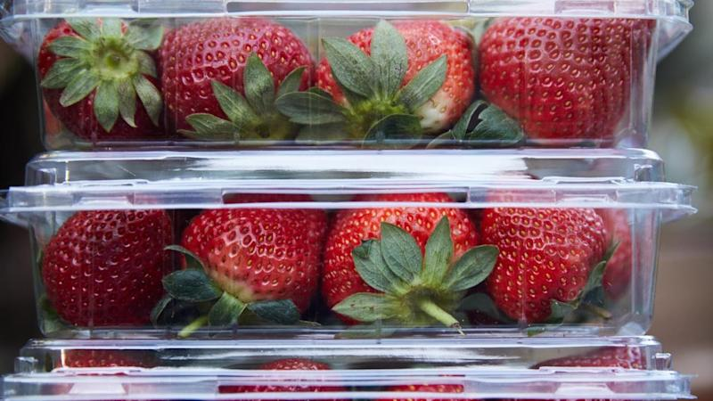 A Blue Mountains schoolgirl in New South Wales has been caught hiding a needle in a strawberry as the fruit contamination fiasco continues.