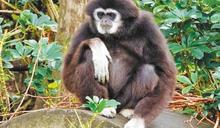 動物園死亡率年年攀升!5年半死811隻 議員批:成世界保育的大笑話