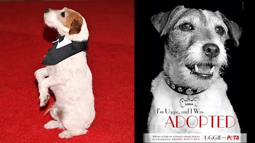 He's Back… Uggie Stars in New Adoption Campaign!