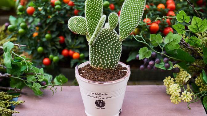 Kaktus (sumber: Pixabay)