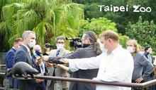 布拉格市長超愛穿山甲 親赴臺北動物園探視