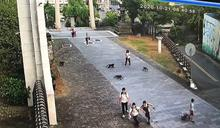 超囂張!近30隻獼猴入侵校園 還想搶學生早餐