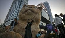 保全用滾水燙懷孕母貓釀一屍5命 中國央視要求立法禁止虐待動物
