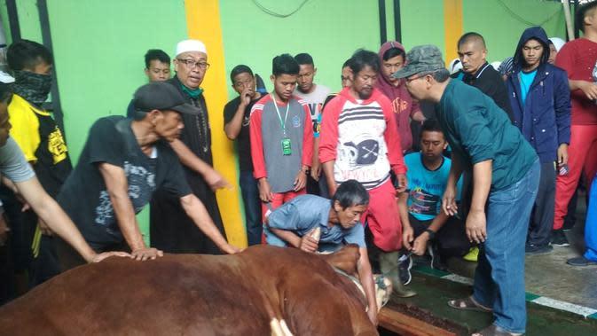 Satu ekor sapi jumbo seberat 1,2 ton tengah disembelih petugas kurban SMKN 1 Garut, Jawa Barat beberapa waktu lalu (Liputan6.com/Jayadi Supriadin)