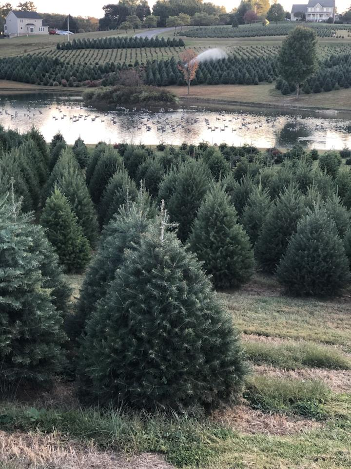 """<p>Roam around <a href=""""http://pinevalleyfarms.com/"""" target=""""_blank"""">Pine Valley Farms</a>'s 110 acres in search of your Christmas tree. Afterwards, enjoy a cup of hot cocoa or cider in their Christmas barn. There, you can shop for a matching wreath and other holiday decorations for your home.</p><p><a class=""""body-btn-link"""" href=""""https://go.redirectingat.com?id=74968X1596630&url=https%3A%2F%2Fwww.tripadvisor.com%2FTourism-g41396-Sykesville_Maryland-Vacations.html&sref=https%3A%2F%2Fwww.countryliving.com%2Flife%2Fg24108155%2Fchristmas-tree-farms-near-me%2F"""" target=""""_blank"""">PLAN YOUR TRIP</a></p>"""