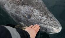 512歲!北大西洋現地表最長壽鯊魚