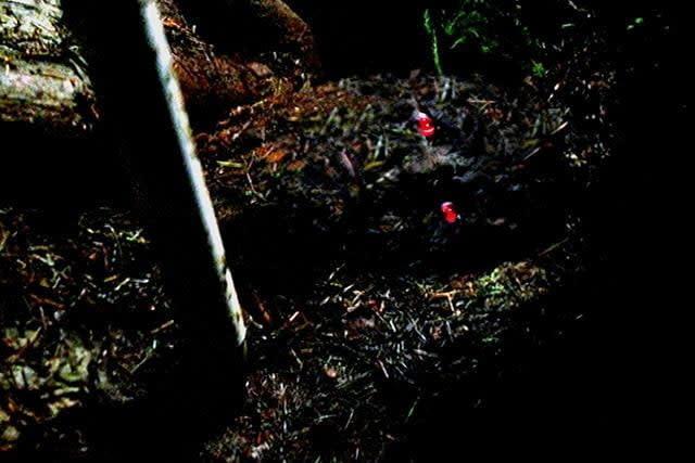 X-Files Detour