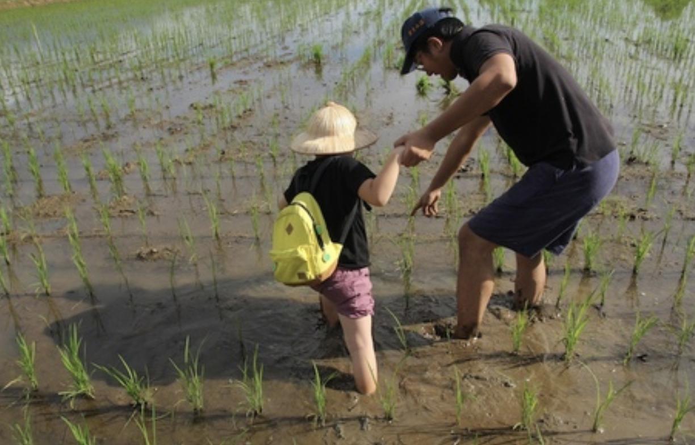 自然耕種源天然 力推米食復興