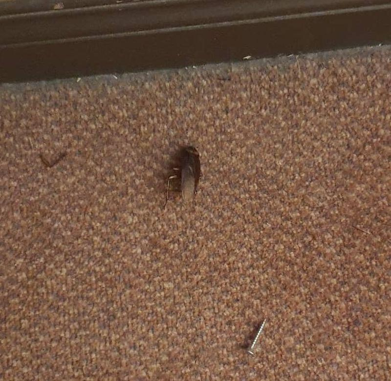 The general condition of the hotel rooms is one of neglect and filth, with pests such as cockroaches plentiful and poorly maintained amenities. — Picture courtesy of R. Sangkari
