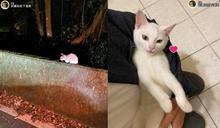 上山遇見小白貓 沿路賣萌撒嬌「躺好躺滿」網:撿到寶!