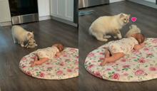 母貓硬塞小貓給女嬰 嘴中狂碎念:牠很可愛吧!