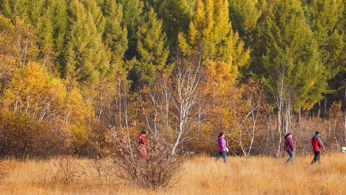 Sejumlah wisatawan mengunjungi Taman Hutan Nasional Saihanba di Chengde, Provinsi Hebei, China utara, pada 27 September 2020. (Xinhua/Liu Mancang)