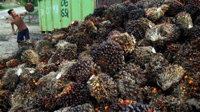 PTPN V Genjot Produksi Sawit Dukung Pemulihan Ekonomi Nasional