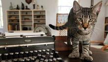 疫情下博物館欠經費 50隻貓咪要捱餓