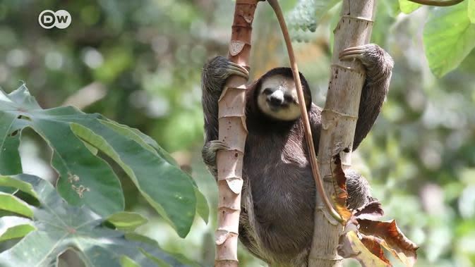 Habitat Hilang di Balik Surga yang Terancam
