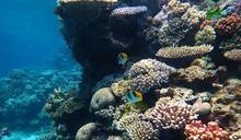 120年來首見!澳洲專家新發現「珊瑚礁」:跟101一樣巨大