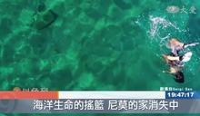 搶救!以色列珊瑚生存危機