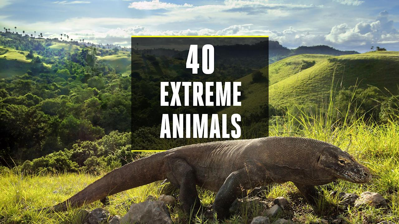 <p>To cut it in the animal kingdom, you have to be tough—<em>really</em> tough. From withstanding brutal climates to fending off ferocious predators, surviving in the wild is no small feat. But a few cunning creatures have developed crazy traits and habits to stay in the game. Here are 40 of the most genetically gifted, physically freakish, and just plain amazing animals in the world.</p>