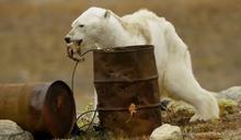 從北極熊翻垃圾桶,談餵食動物是否對生態造成干預?