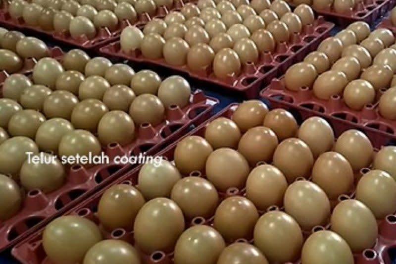Balitbangtan kembangkan teknologi perpanjang umur telur ayam