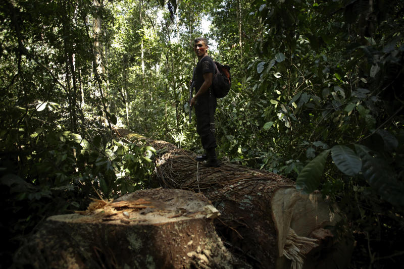 Brazil Indigenous Forest Owners