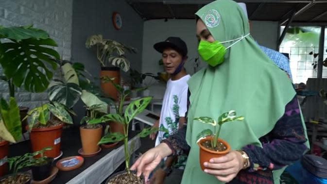 7 Momen Kartika Putri Berburu Janda Bolong, Kaget Harganya Capai Rp 90 Juta (sumber: YouTube Kartika Putri Official)