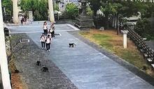 猩球崛起台灣版!拆監視器搶學生早餐 台灣獼猴大鬧雲林淵明國中