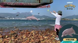 【動物AR】中華白海豚是被糟蹋的「海上國寶」?