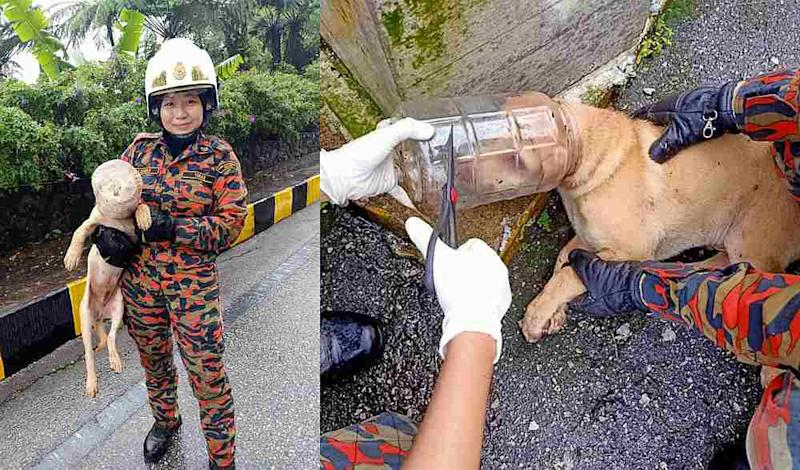 The firefighters help free the pooch by carefully cutting the container open with scissors. — Picture from Facebook/ BBPGentingHighlandsPahang