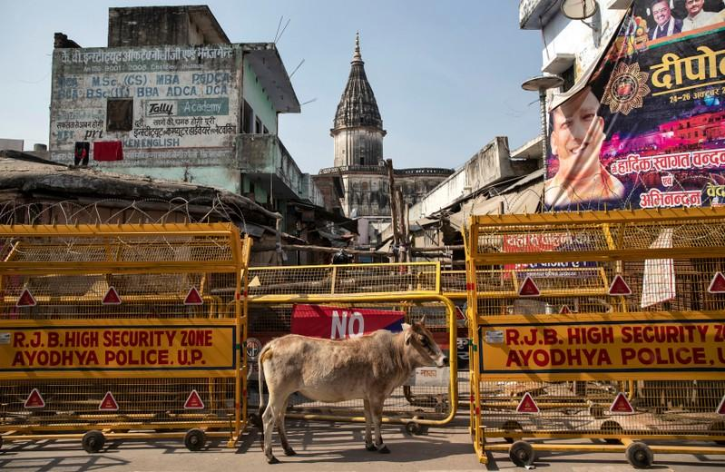A cow stands in front of a security barricade in a street in Ayodhya