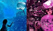 直擊「最夢幻水族館」桃園Xpark!「水母萬花筒」等4大亮點超驚艷