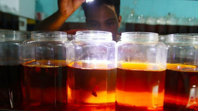 Mengintip Bisnis Ikan Cupang Selama Pandemi Covid-19 di Surabaya