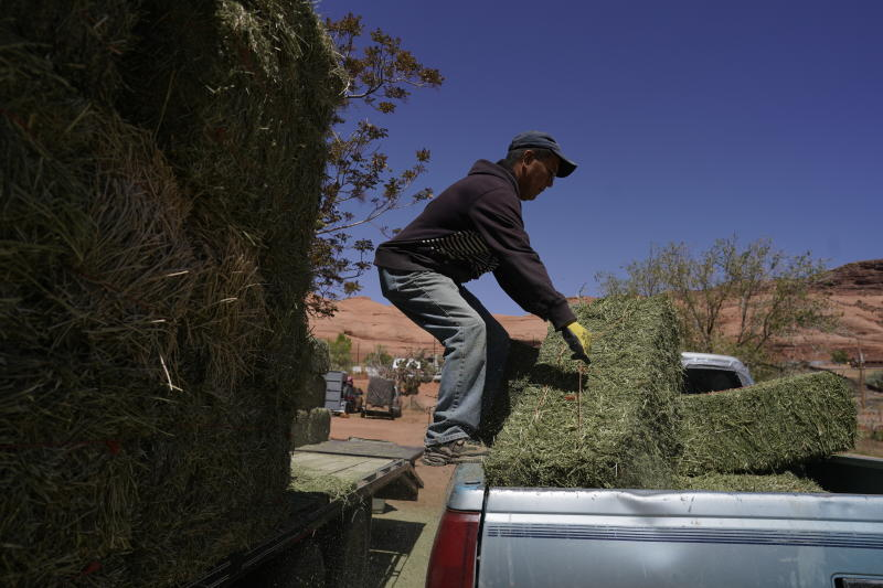 In this April 27, 2020, photo, Charlie Whitehouse loads hay into the back of a pickup truck in Oljato-Monument Valley, Utah, on the Navajo reservation. Even before the pandemic, people living in rural communities and on reservations were among the toughest groups to count in the 2020 census. (AP Photo/Carolyn Kaster)