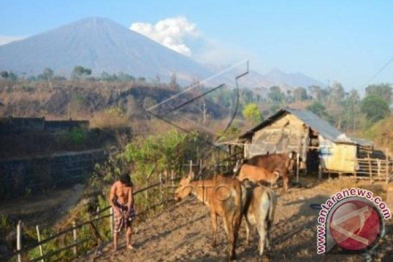 NTB siap wujudkan program 1.000 Desa Sapi