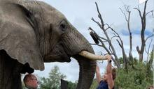 【環球趣聞】南非睇動物 健身教練用象牙做引體上升