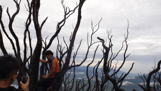 Pesona Hutan Mati di Gunung Talang, Solok, Sumatera Barat. (Foto: Liputan6.com/ Novia Harlina)
