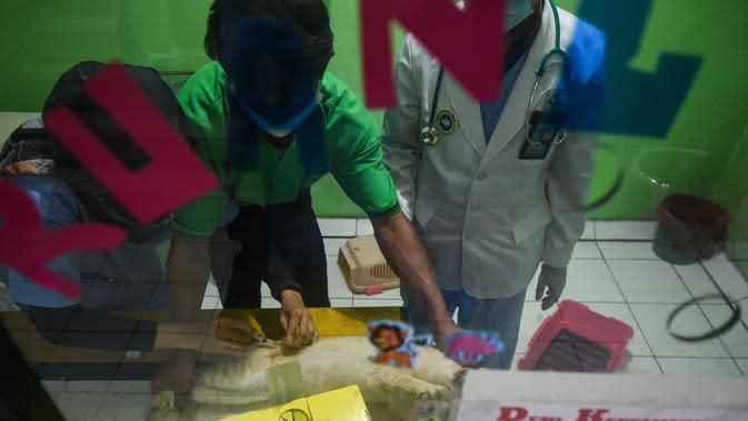 Sejumlah dokter hewan memberikan vaksin rabies pada seekor kucing di Rumah Sakit Hewan Jakarta (RSHJ) di Ragunan, Jakarta (22/9/2020). Rumah sakit ini juga berfungsi sebagai sekolah medis dan pusat pelatihan bagi dokter hewan. (Xinhua/Agung Kuncahya B.)