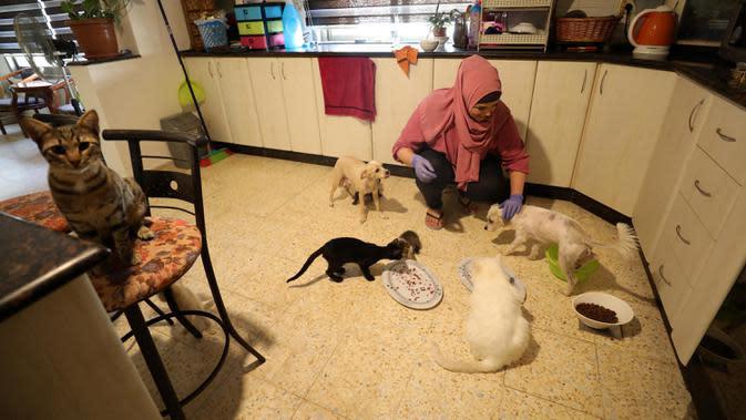 Wanita Palestina, Maha Mansoura (52) merawat kucing dan anjing dalam rumahnya di Kota Ramallah, Tepi Barat, 7 Oktober 2020. Hewan telantar di Ramallah dapat menikmati tempat berlindung yang aman setelah Maha Mansoura mengubah rumahnya menjadi tempat penampungan. (Xinhua/Ayman Nobani)