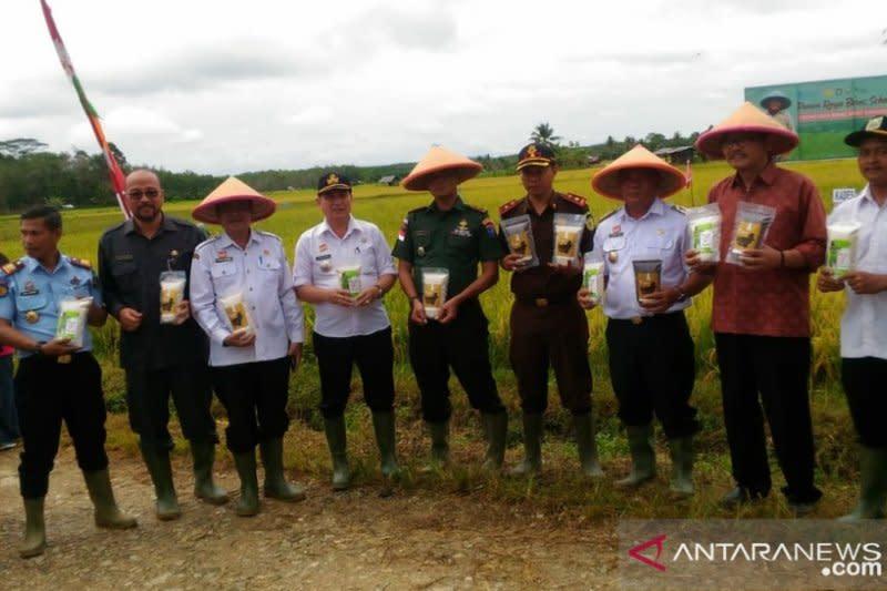 """Pertanian organik Sanggau hasilkan beras sehat """"Serumpun Borneo"""""""
