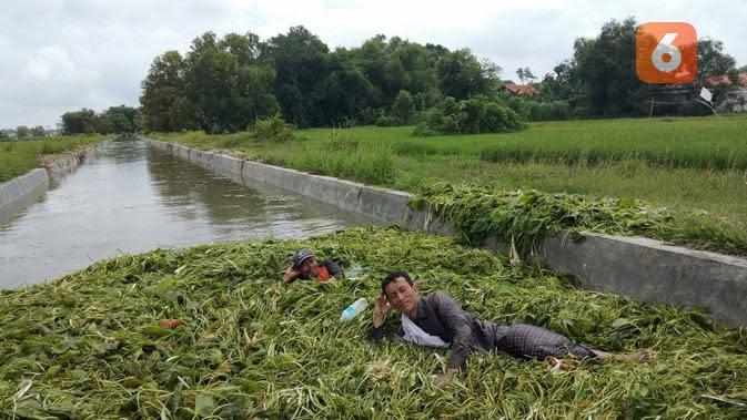 Anggota DPRD Bangkalan Abd Aziz sedang tiduran hamparan Enceng gondok yang memenuhi irigasi di kelurahan Tunjung.