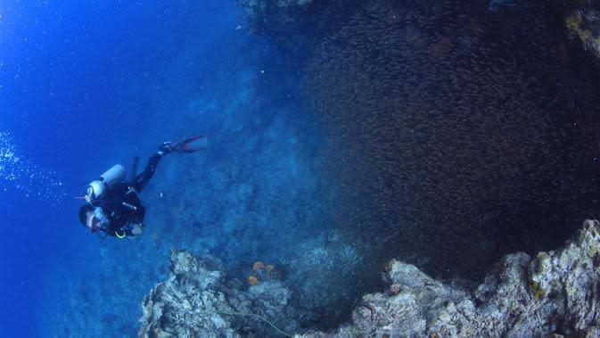 Terdapat 16 spesies terumbu karang, 13 spesies ikan karang atau ikan hias, 17 jenis moluska dan 8 jenis rumput laut,