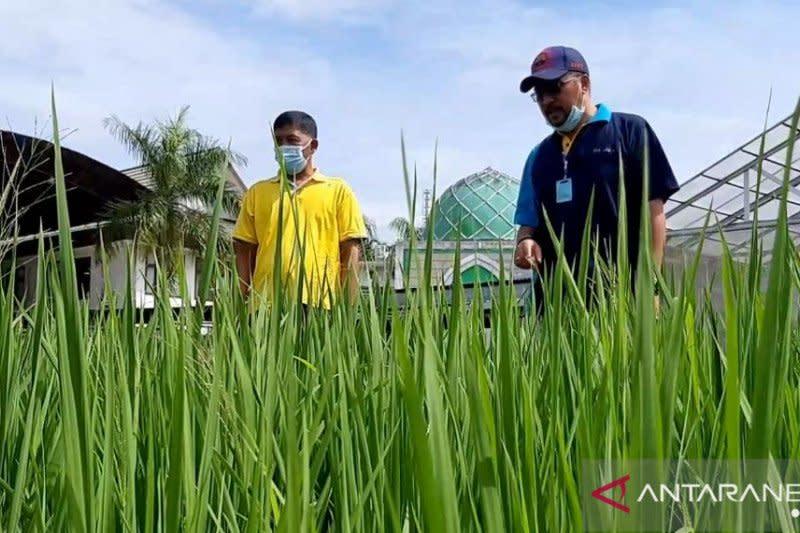 Kalbar dapat perluasan areal tanam padi Kementan seluas 21.736 hektare