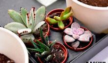 綠美化園藝療癒課程 協助紓解壓力