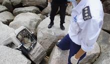 沙灘兩日驚現貓狗屍困寵物籠 愛協呼籲物主提供資料跟進