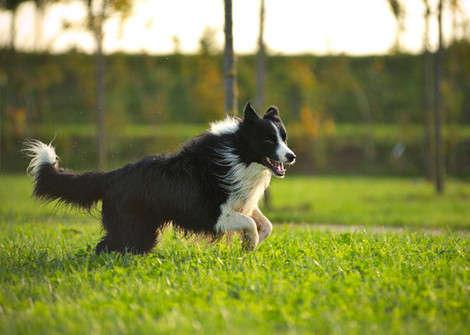 7 Best Dog Breeds for Country Living