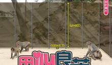 鐵線圍欄淪擺設 護猴高身膠檔板贏盡口碑 漁護署拒用惹民憤